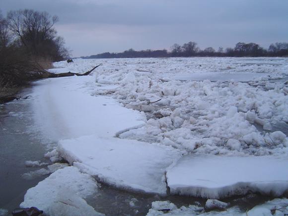 Jeigu Šilutė nutartų sprogdinti Nemuno ledus, Aplinkos ministerija eitų skaičiuoti nuo sprogimo žuvusių žuvų. (L. Mockaus nuotr.)