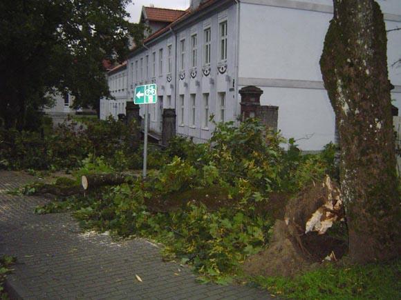 Šioje vietoje praeitų metų rugsėjo 14 d. pavakarę vėjo nulaužtas klevas mirtinai sužalojo 65 metų Šilutės priemiesčio Traksėdžių gyventoją Oną. V. (silutesetazinios.lt archyvo nuotr.)