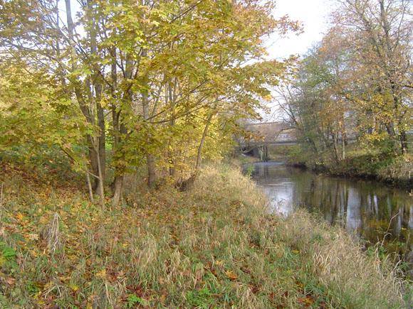 Šyšos upės pakrantėse, atkarpoje nuo geležinkelio tilto iki Verdainės užtvankos, planuojamas kone plynas medžių kirtimas. (Liudo Mockaus nuotr.)