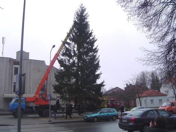 Pernai prieš Kalėdas 17 metrų aukščio žaliaskarę miestui dovanojo Šilutės miškų urėdija. (silutesetazinios.lt archyvo nuotr.)