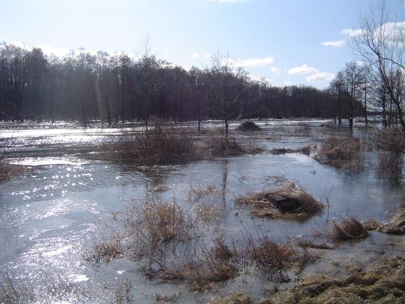 Pievos prie kelio į Rusnę sklidinos vandens. (silutesetazinios.lt archyvo nuotr.)