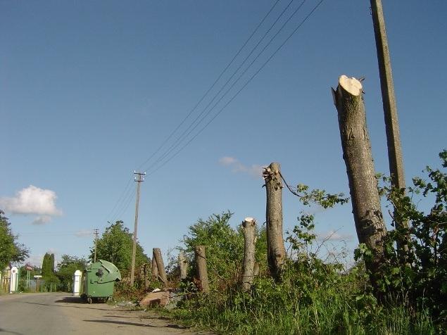 Panašu, kad elektrikai persistengė genėdami medžius po elektros laidais. (silutesetazinios.lt archyvo nuotr.)