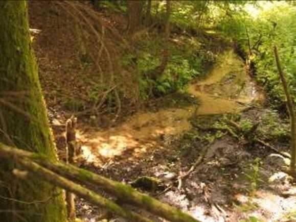 Drąsučio šaltinis Šereitlaukio miške. (Vido Mikulėno nuotr.)