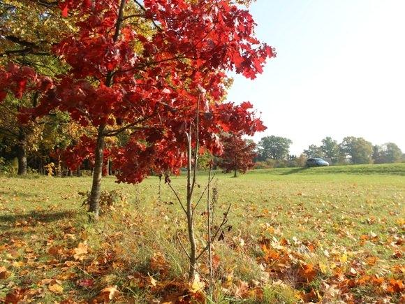 Iš viso Lietuvininkų vilties ąžuolyno liko tik aplaužytas medelis anksčiau už jį ten šaknis suleidusio raudonojo ąžuolo kaimynystėje. (Oresto Lidžiaus nuotr.)