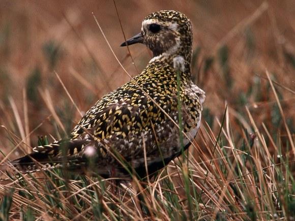 E. Drobelio, www.birdlife.lt, nuotr.
