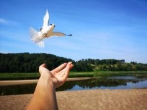 www.birdlife.lt nuotr.